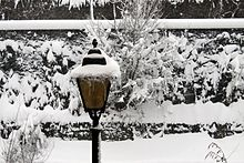 Streetlamp under snow