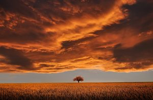 amazing tree and cloud-736875_1280