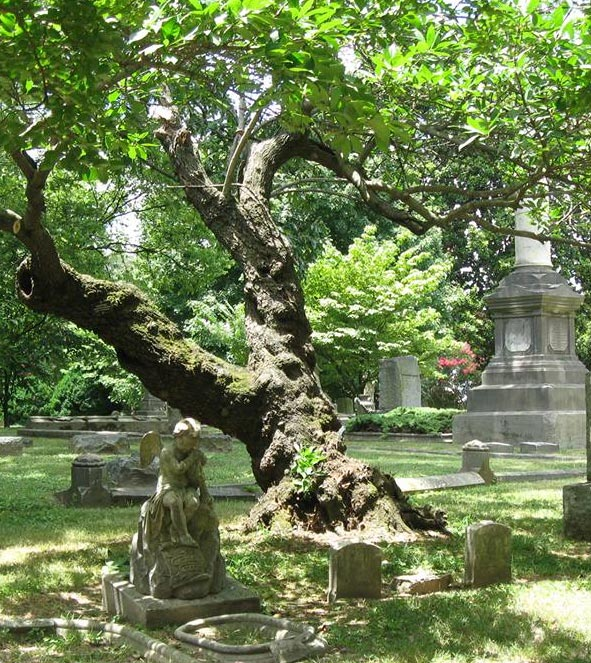 old tree in cemetey
