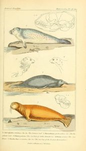 page of illustrated seals