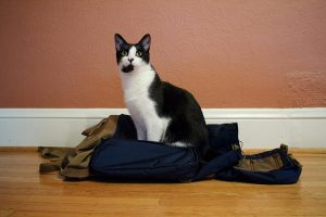 Cat sitting on backpack