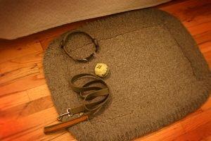 Leash and collar on a dog matt