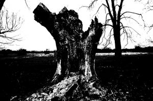 Dead tree (black and white) with limbs cut off