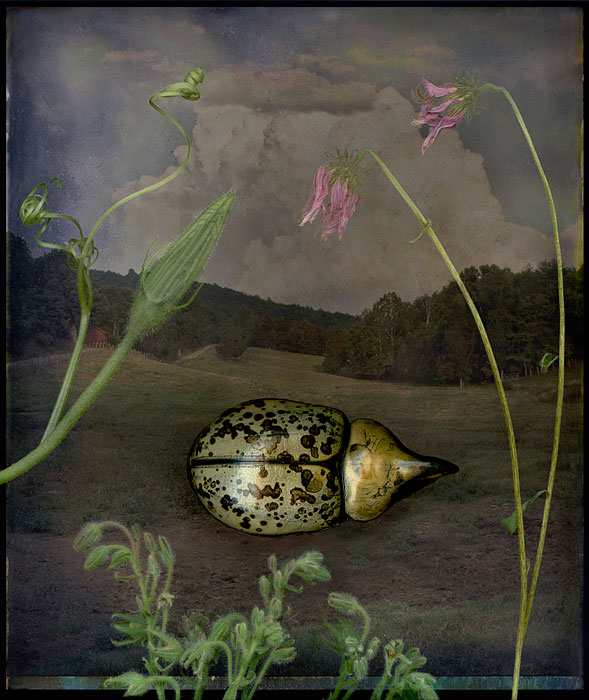 beetle carapace with wildflowers