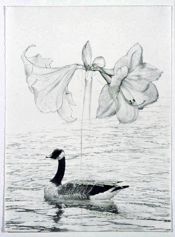 canada goose and amaryllis