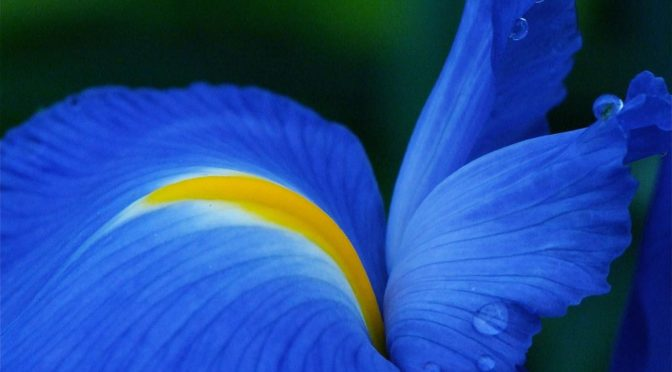 Vibrant blue flower
