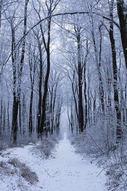 Path through frosted woods