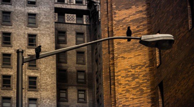 2 birds sitting on a lamp post