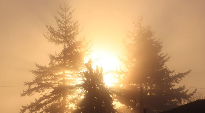 foggy sunrise through trees