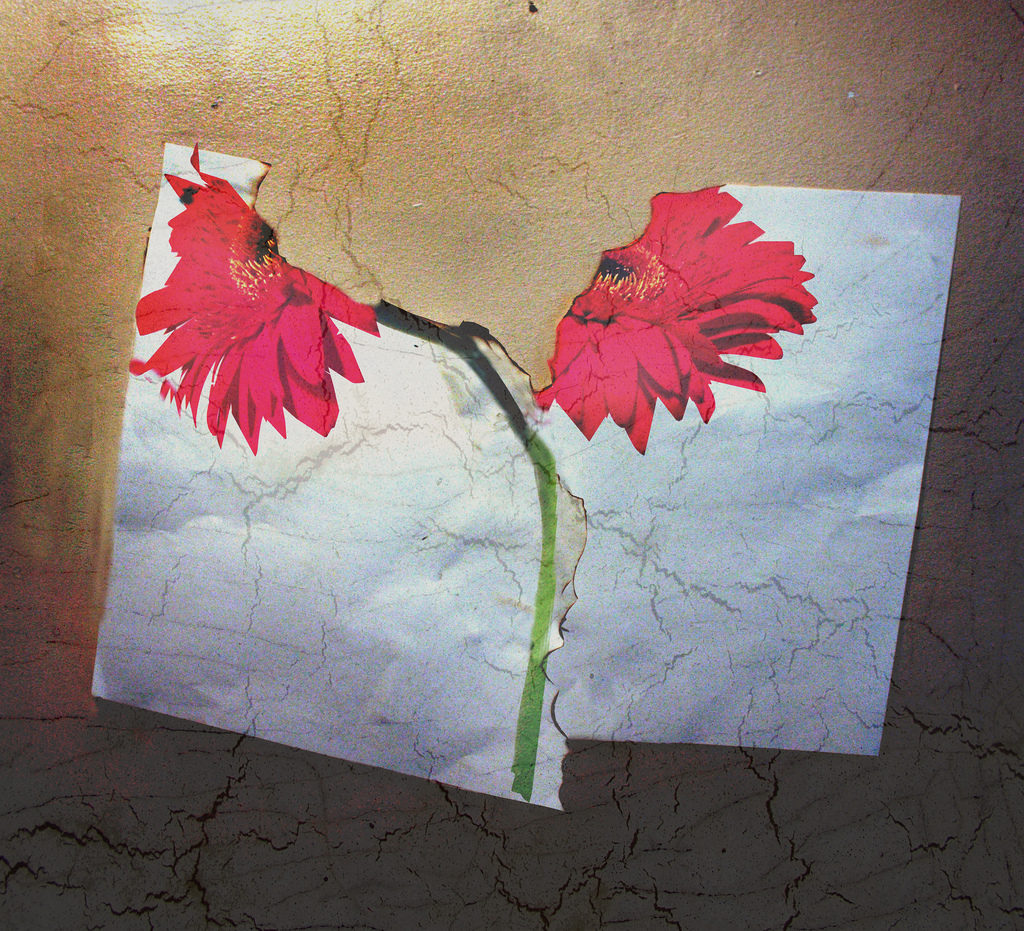 Ripped paper with picture of flower on it