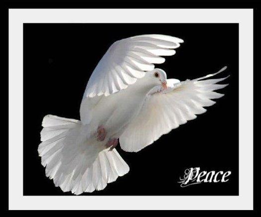Flying white dove
