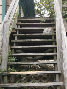 Cat on set of stairs