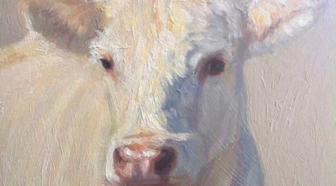 White cow, painted