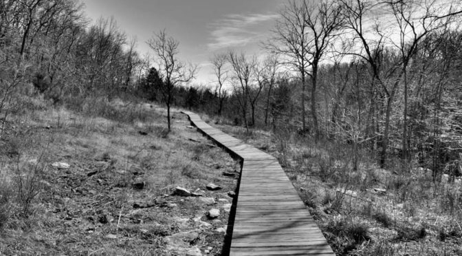 wood boardwalk on hill