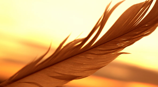 Color Photo of a feather close-up