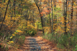 Path through woods in fall