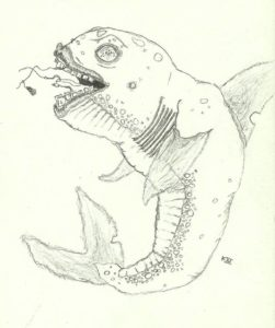 pencil drawing of sea creature