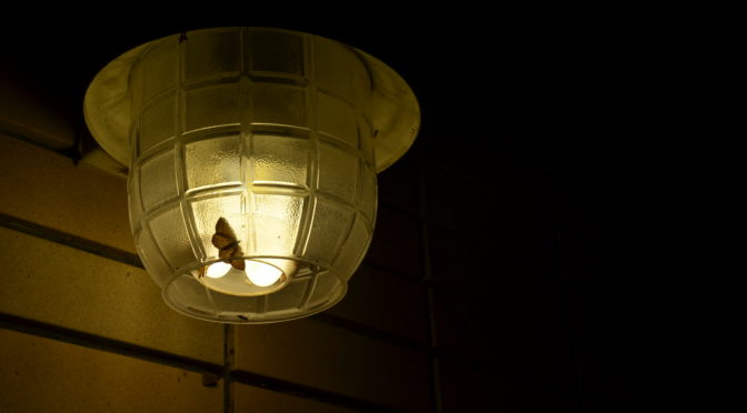 Color photo of a moth near a porch light at night