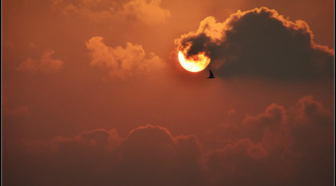 Color photo of clouded sunset with 1 bird flying through