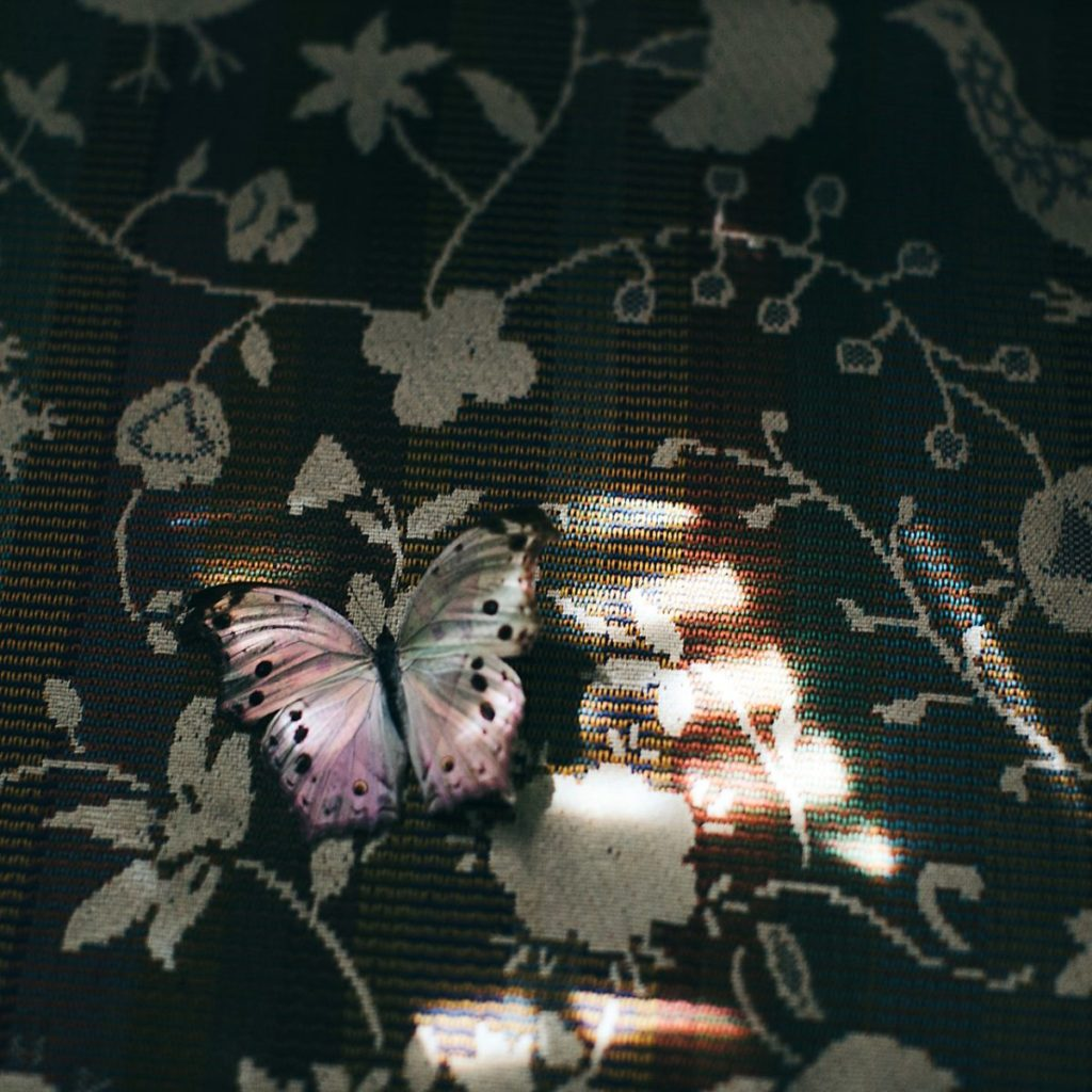 Photo of butterfly on carpet
