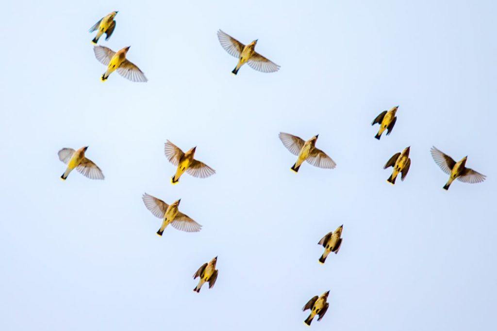 Photo looking up at birds in the sky