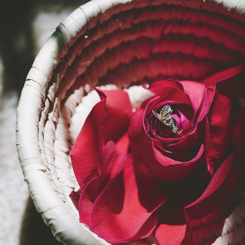 Photo of dead bee on top of a red rose in a basket