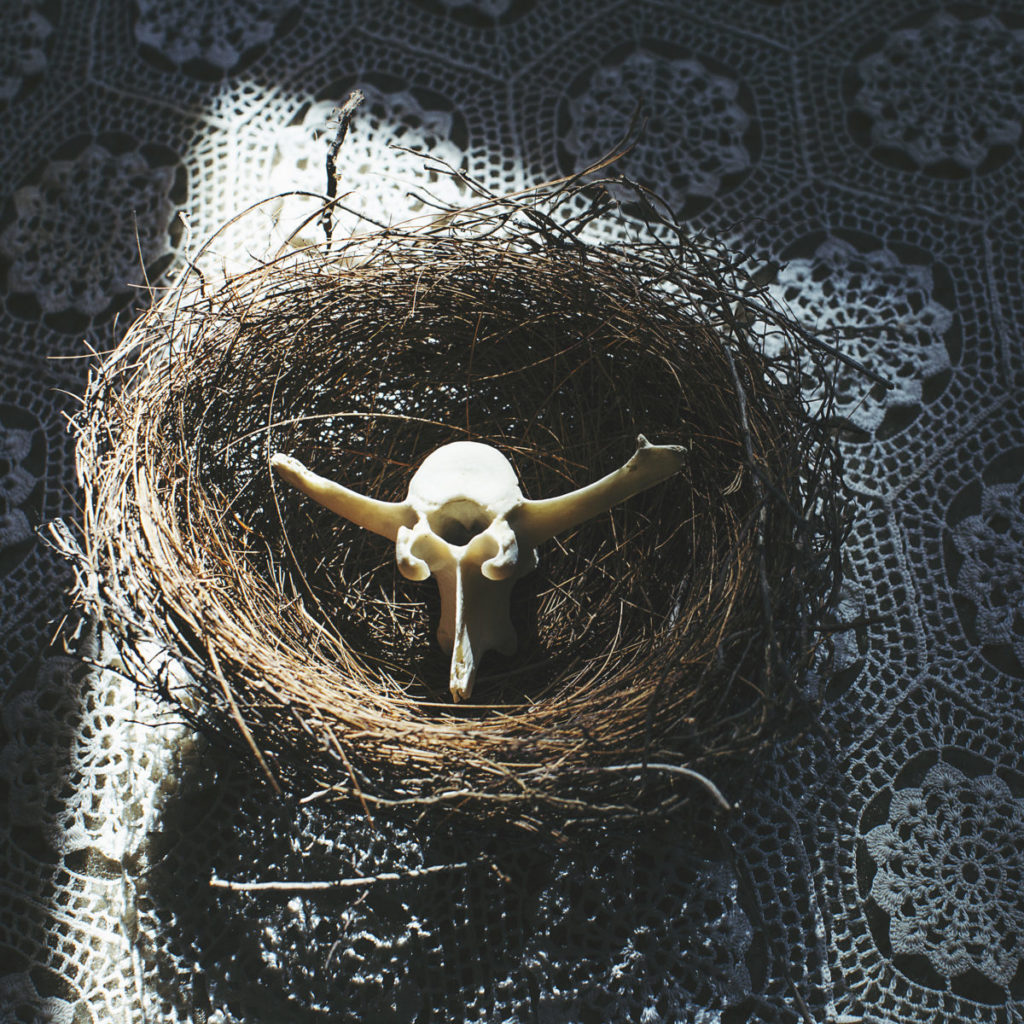 Photo of animal skull in a nest