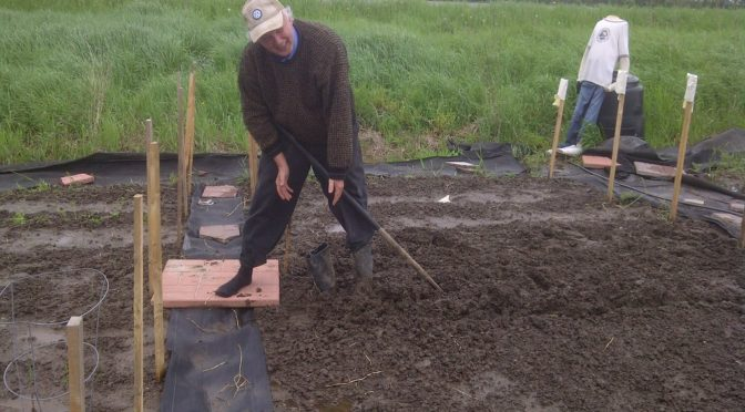Photo of man gardening in muddy bed