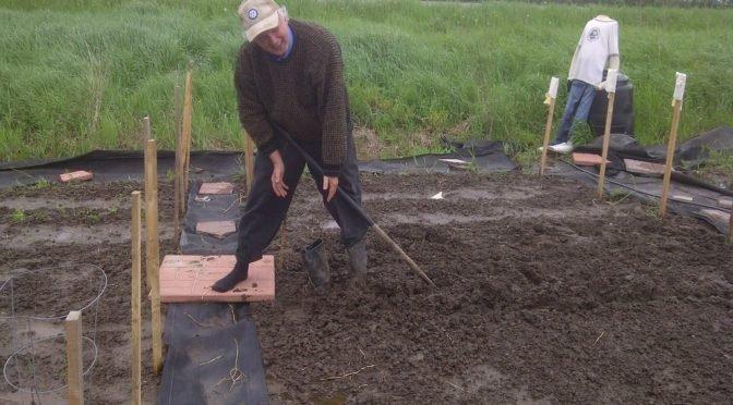 Photo of man gardening in muddy bed
