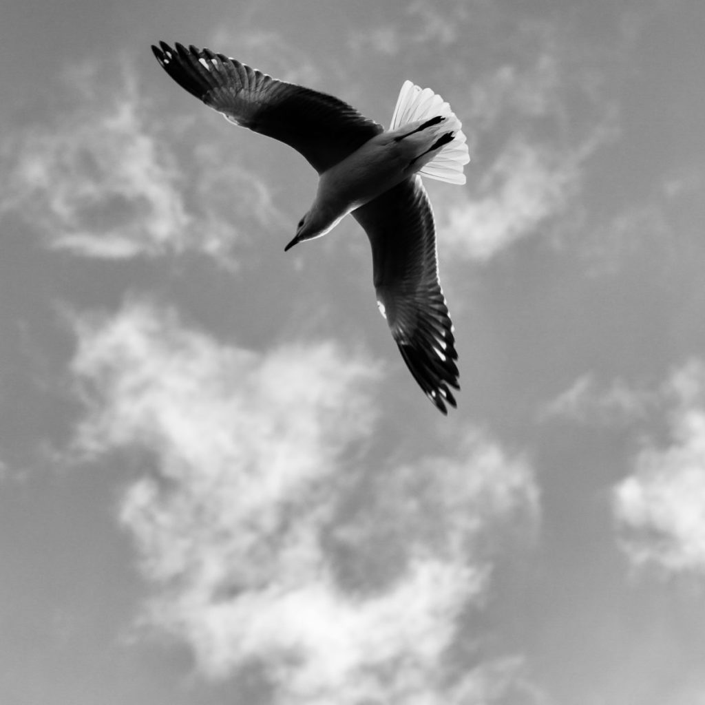 Black and white photo looking up at bird
