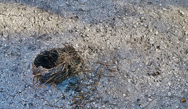 color photo of fallen bird's nest on asphalt