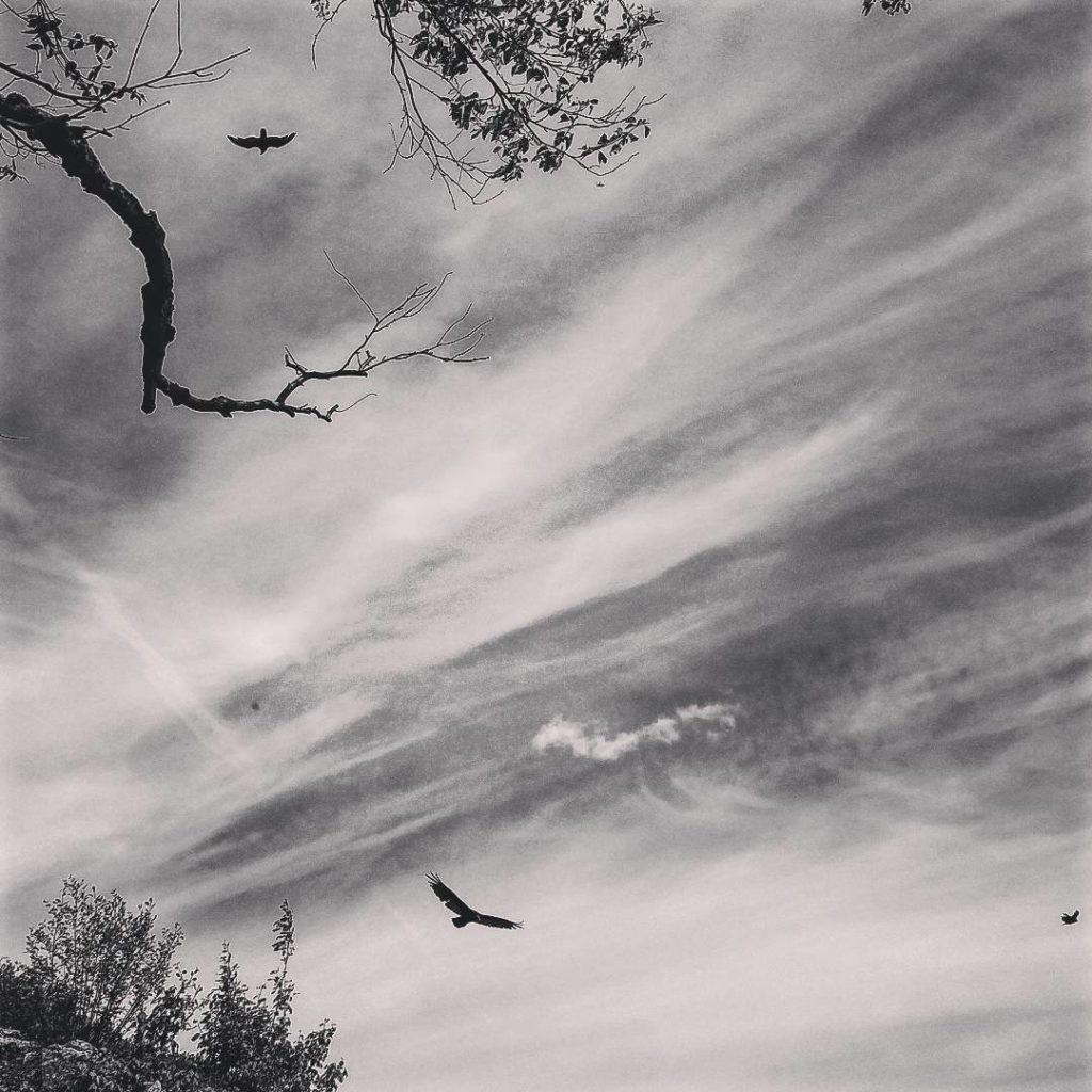 Black and white photo of birds against sky