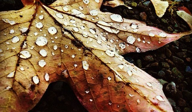 Color photo closeup of leaf with water droplets