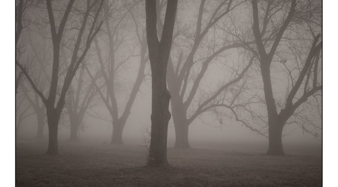 Black and white foggy morning with multiple trees