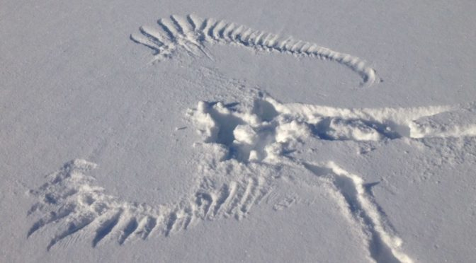large snow angel