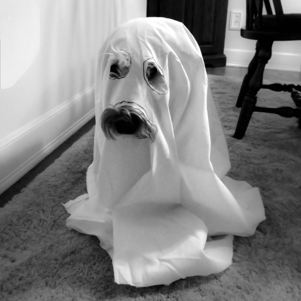 Black and white photo of dog covered by sheet/ghost costume