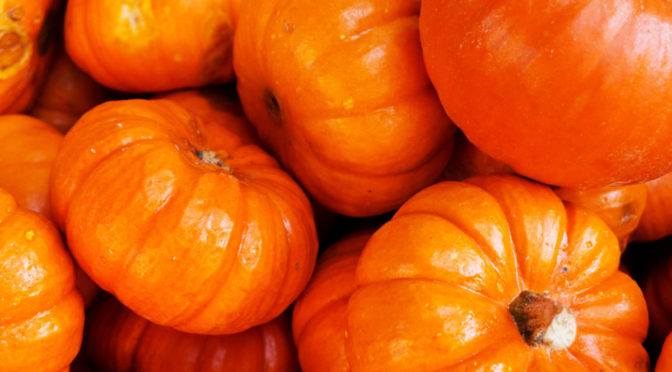 Close-up photo of group of orange mini-pumpkins