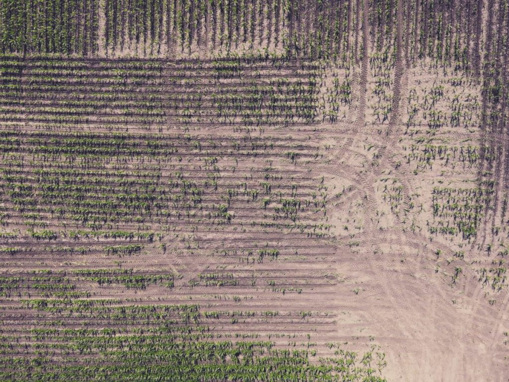 Aerial view of farm field