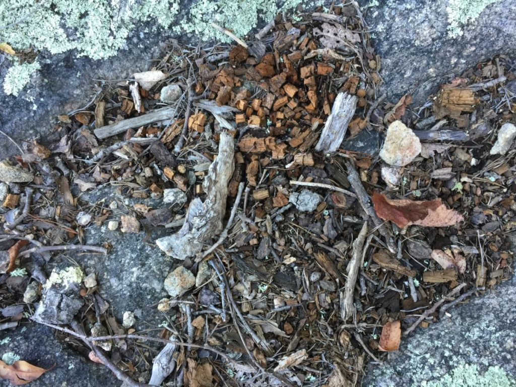 Photo of leaves and sticks on ground