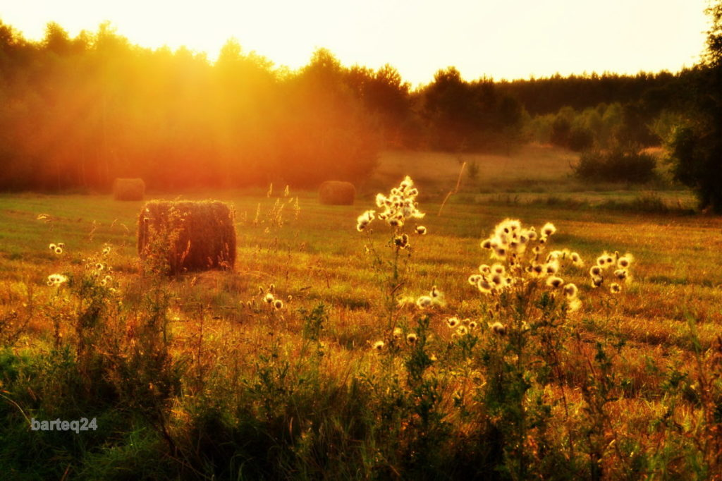 hazy, summer field