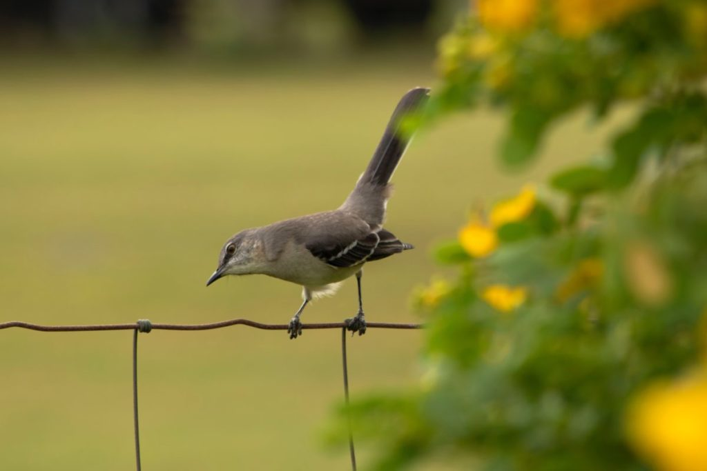 Photo of bird on wire fence