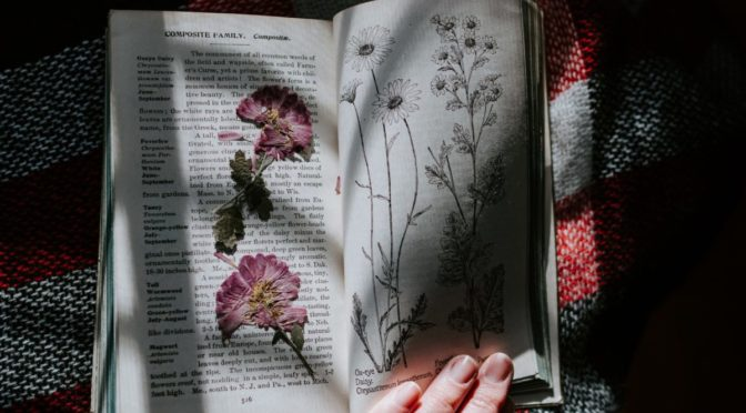 Photo of book with dried flowers inside