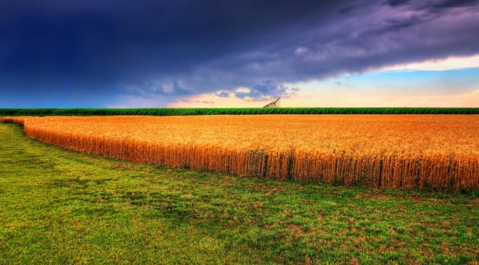 Photo of wheat fields