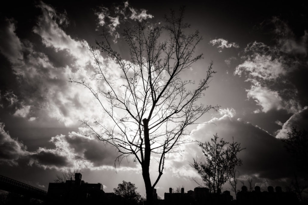 Black and white photo of bare tree