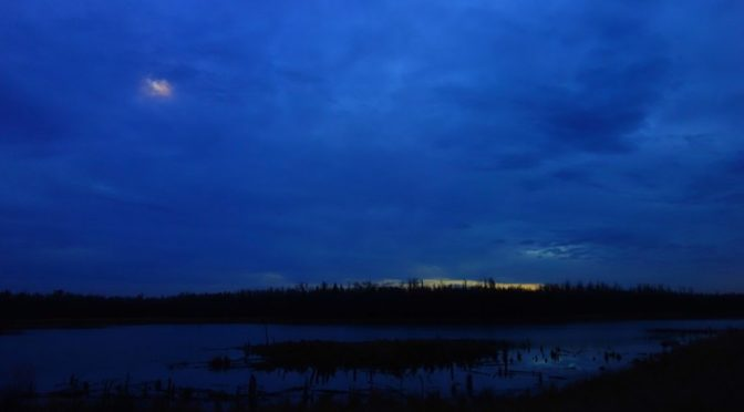 cloudy moonrise over deep blue swamp