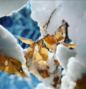 Close-up photo of leaf in snow