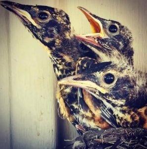 Close-up photo of new birds