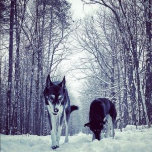 Photo of dogs in snow