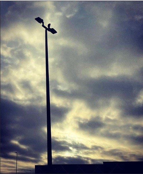 Photo of bird on lightpole