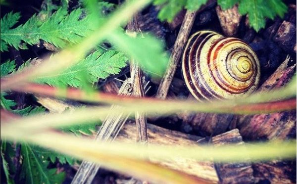Close-up photo of snail